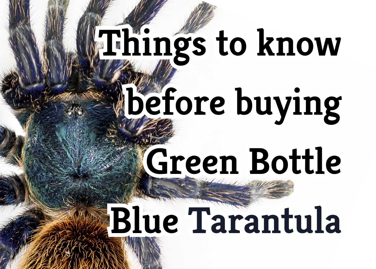 23 Crucial Things to Know About the Green Bottle Blue Tarantula