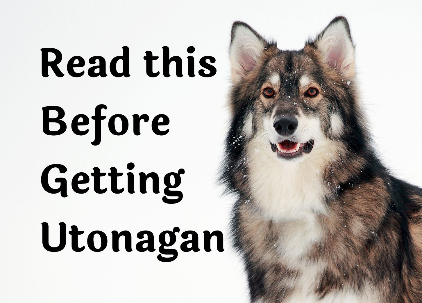 28 Questions to Consider Before Getting A Utonagan