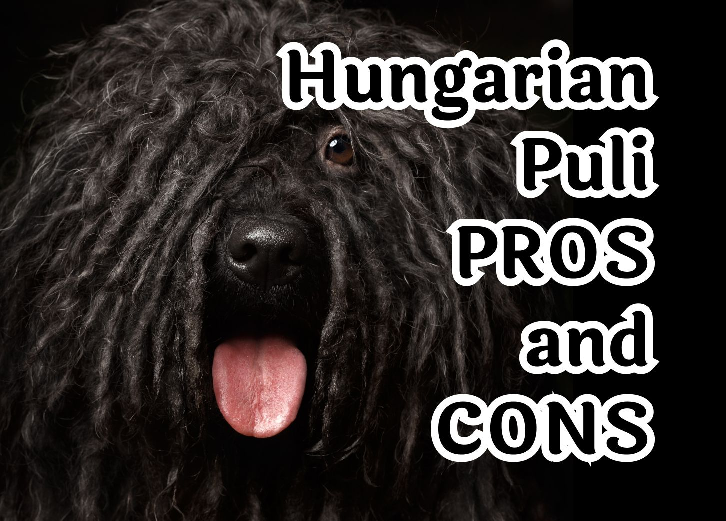 The 7 characteristics that make the Hungarian Puli special