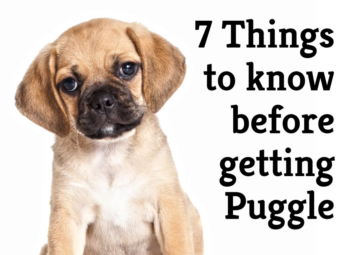 The 7 questions you need answered before you get a Puggle