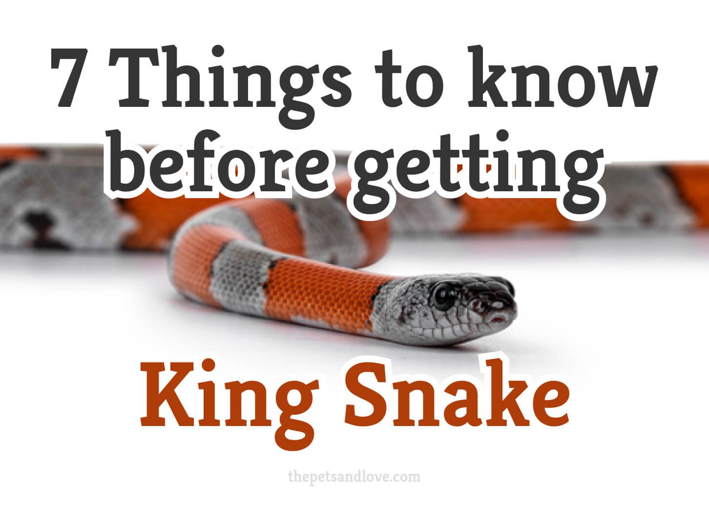 7 things you should know before getting a kingsnake