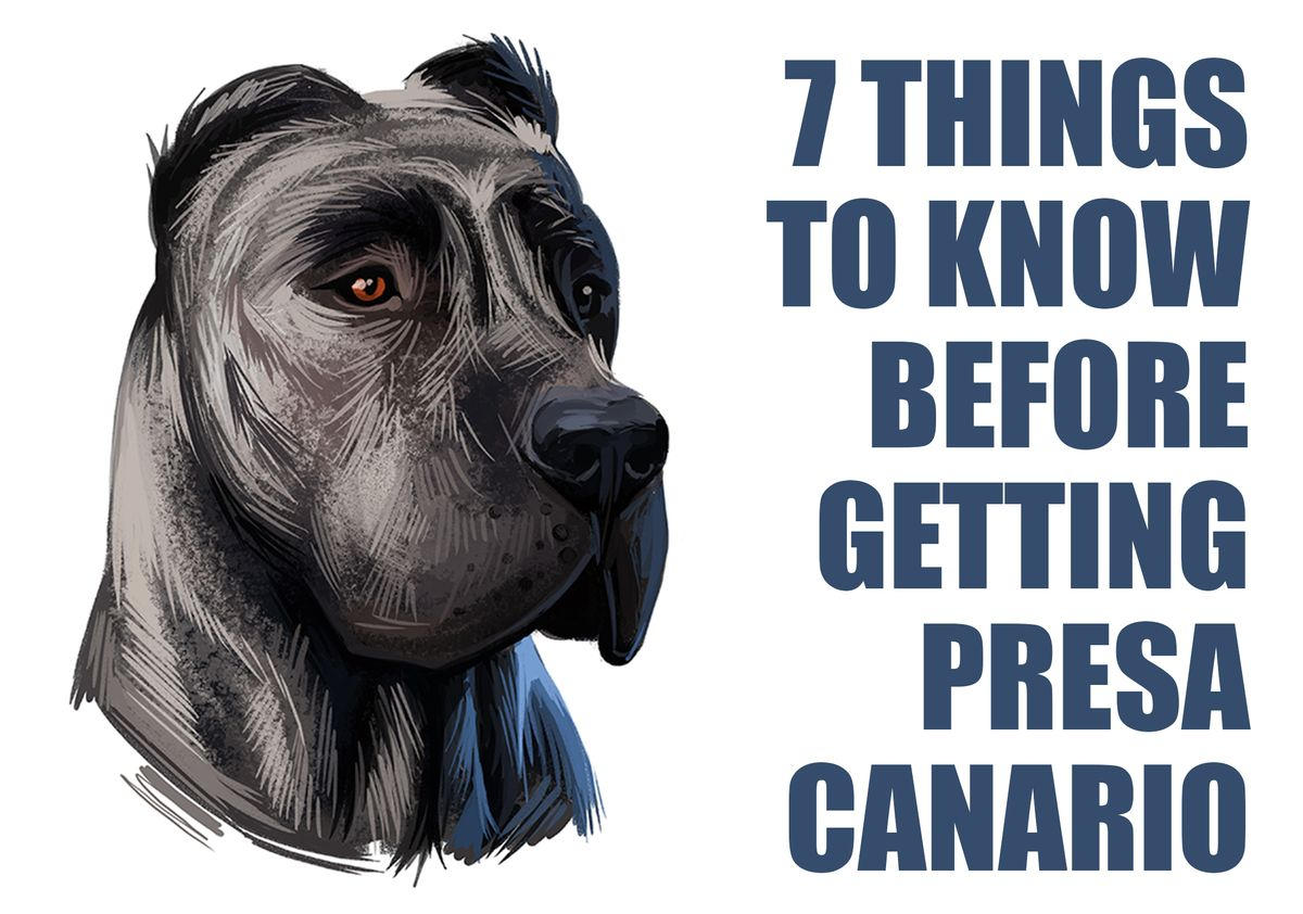 7 Things To Know Before Getting A Presa Canario