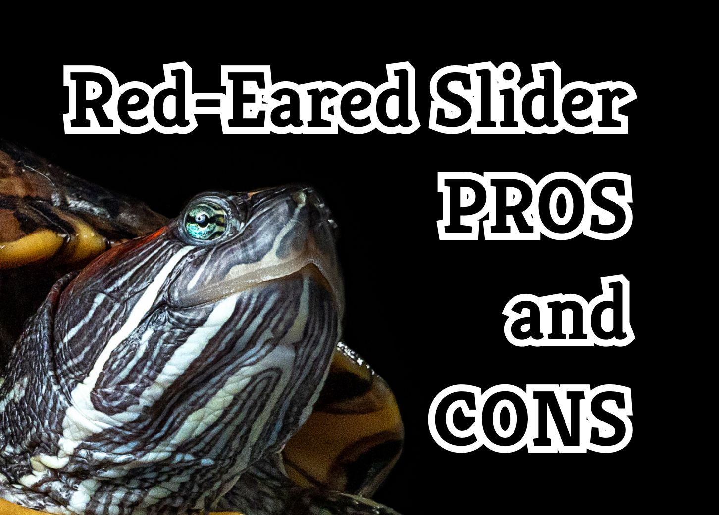 9 Things you Should Know About Red-Eared Slider Turtles