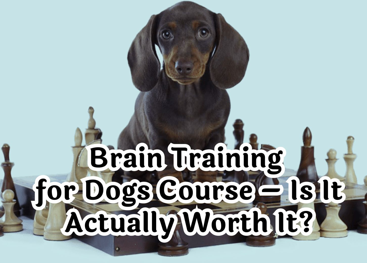 Brain Training For Dogs Course – Is It Actually Worth It?