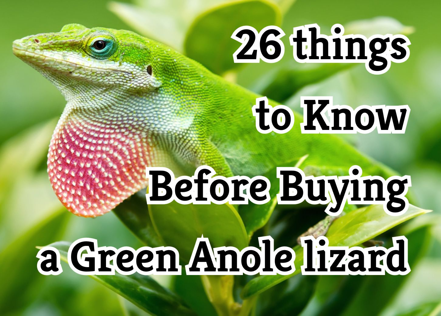 26 Crucial Things to Know About the Green Anole as Pets