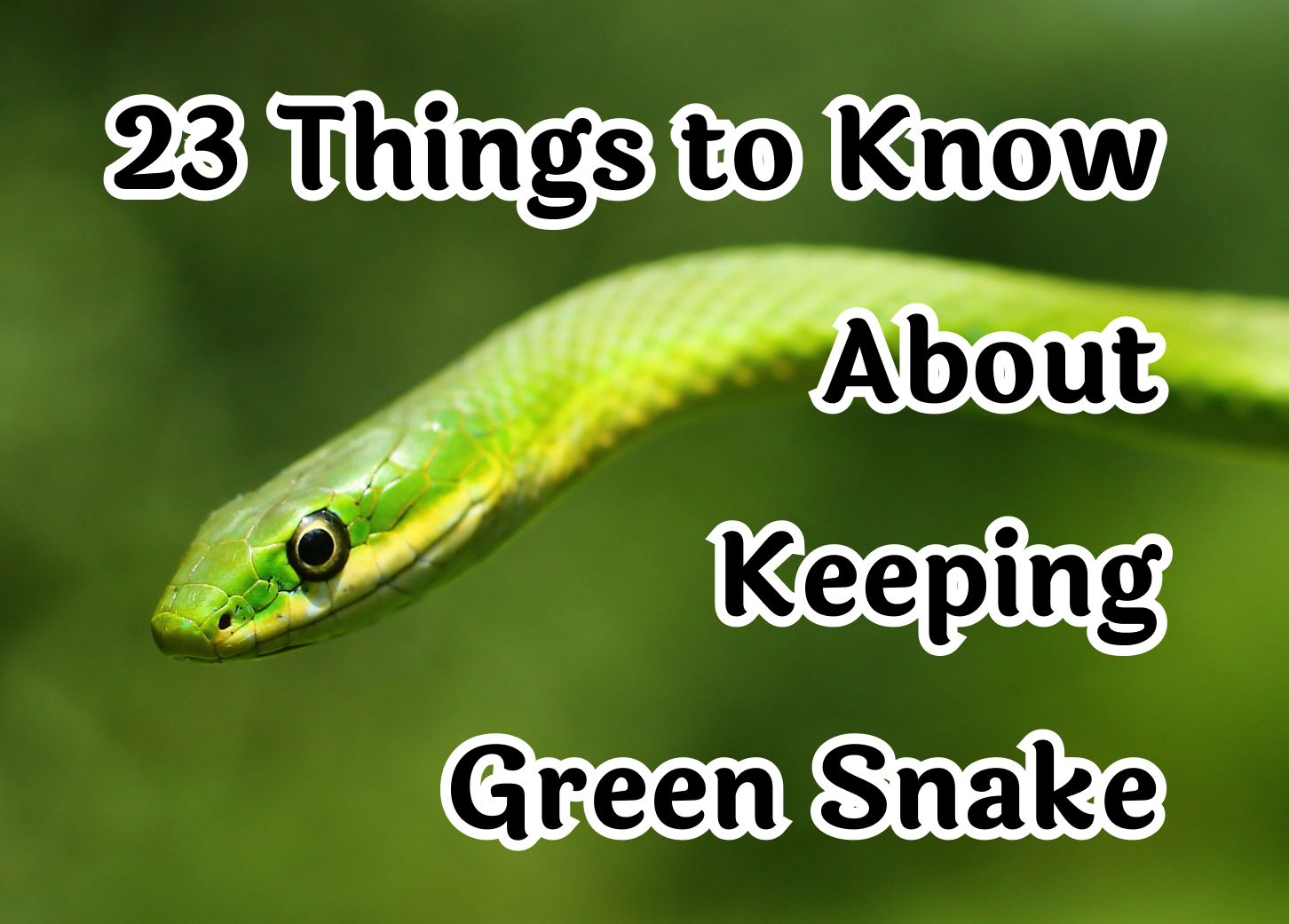 23 Crucial Things to Know About the Green Snake