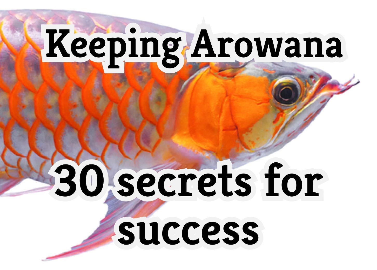 Keeping Arowana – 30 Secrets For Success