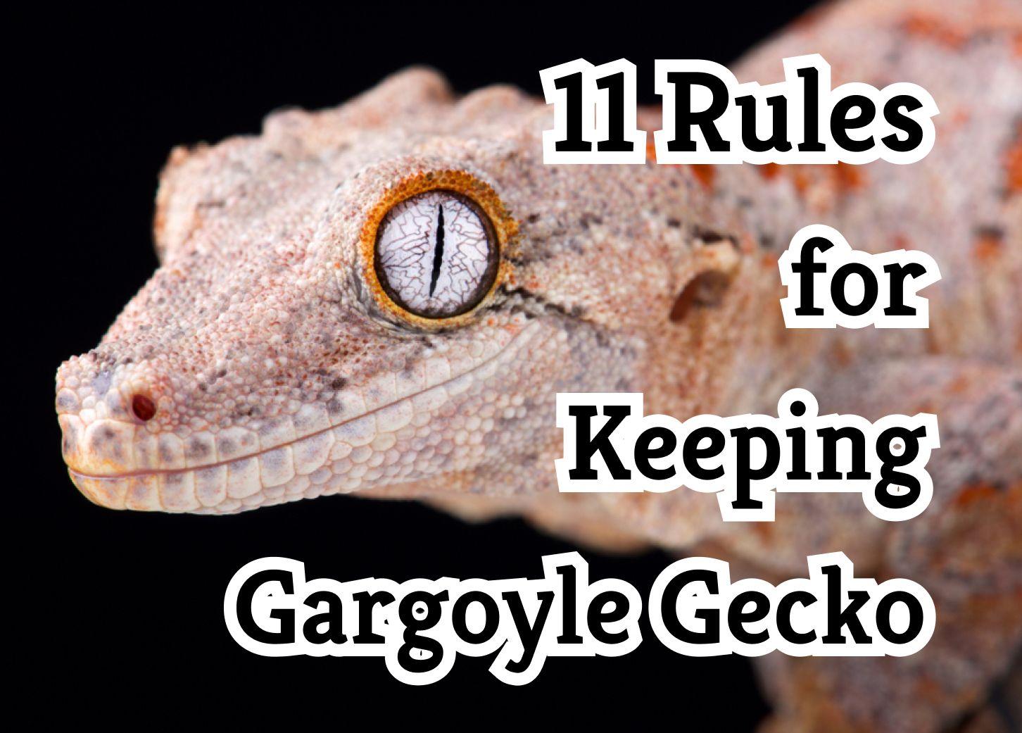 Keeping Gargoyle Gecko – 11 Secrets For Success