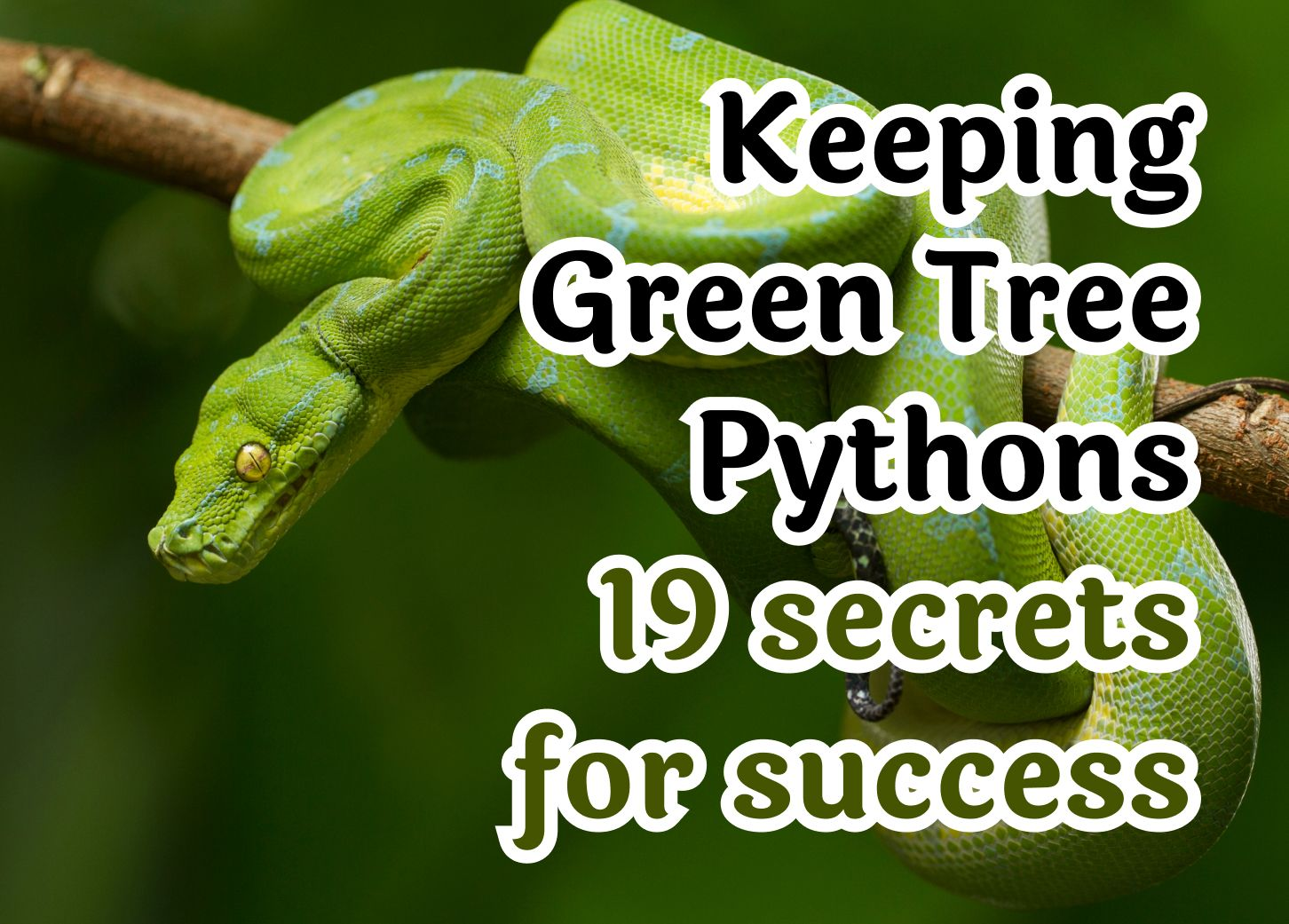 Keeping Green Tree Pythons - 19 secrets for success