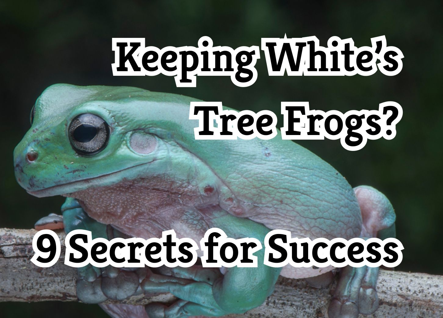 Keeping White's Tree Frogs? 9 Secrets for Success