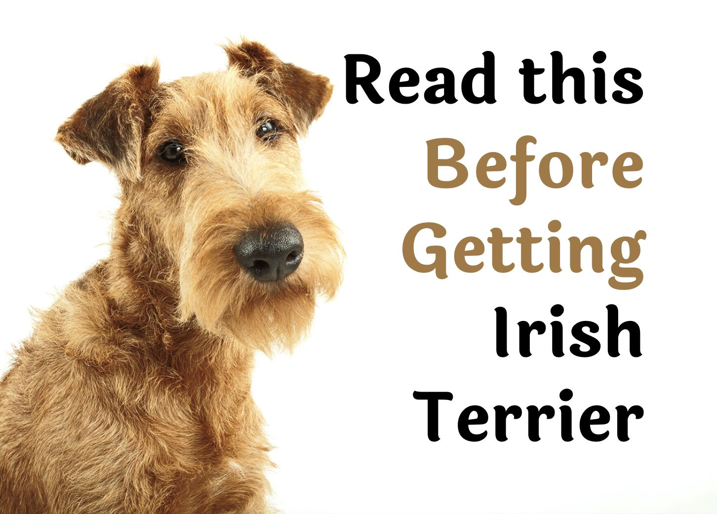 Questions To Ask Before Getting An Irish Terrier