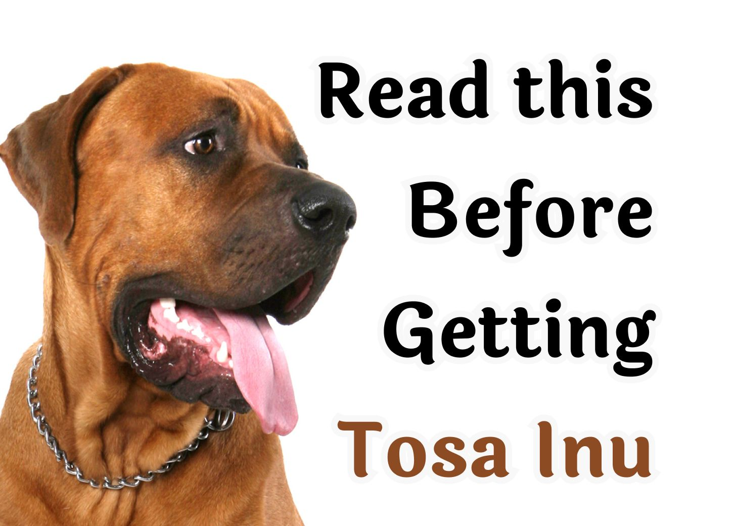 22 Questions То Consider Before Getting A Tosa Inu