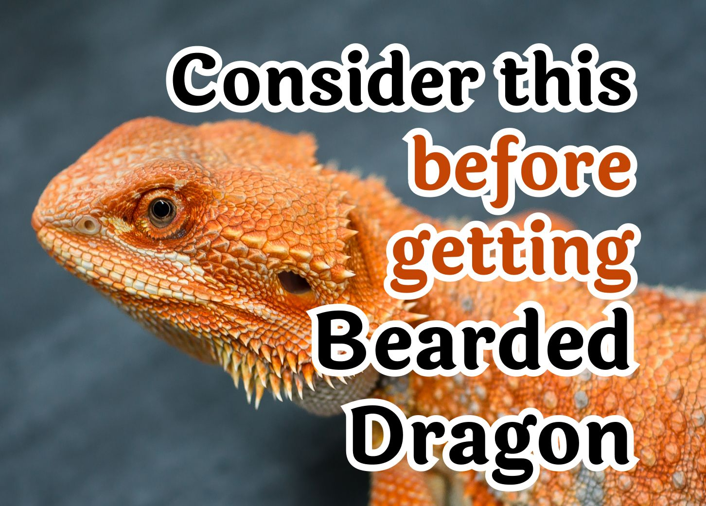 30 Questions Which Should Be Considered Before Getting A Bearded Dragon Pet