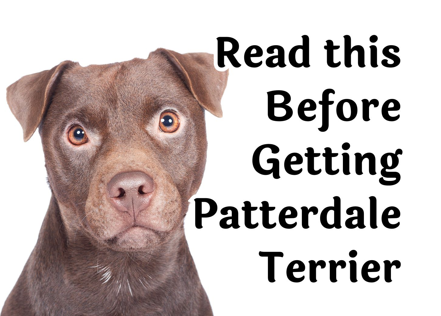 25 Questions You Need Answered Before Getting A Patterdale Terrier