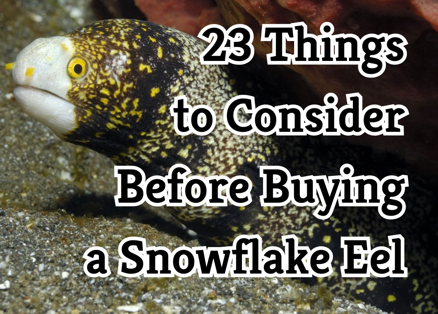 Things to Know About the Snowflake Eel