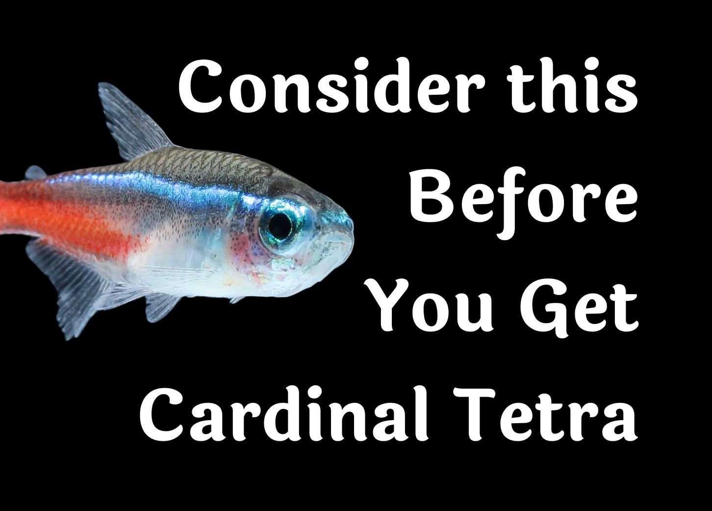 20 Things To Know Before Getting A Cardinal Tetra Into Your Aquarium