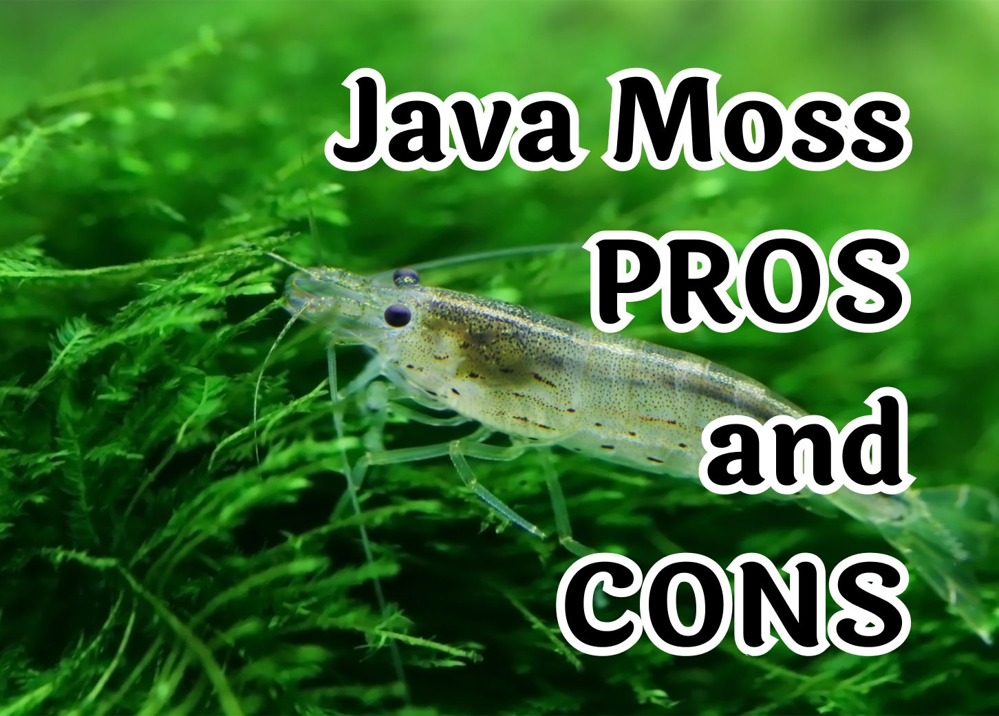 Important things to know before introducing Java Moss into your aquarium