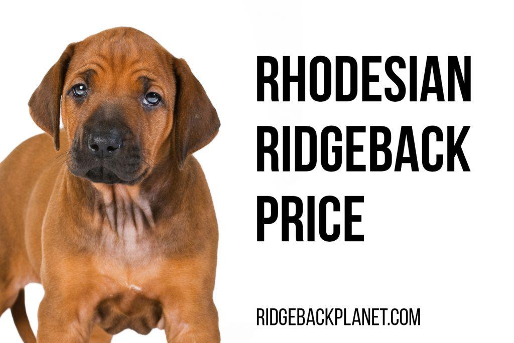 Rhodesian Ridgeback puppy price