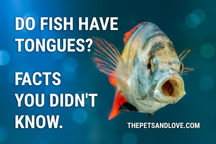 Do Fish Have Tongues? Facts you didn't know.