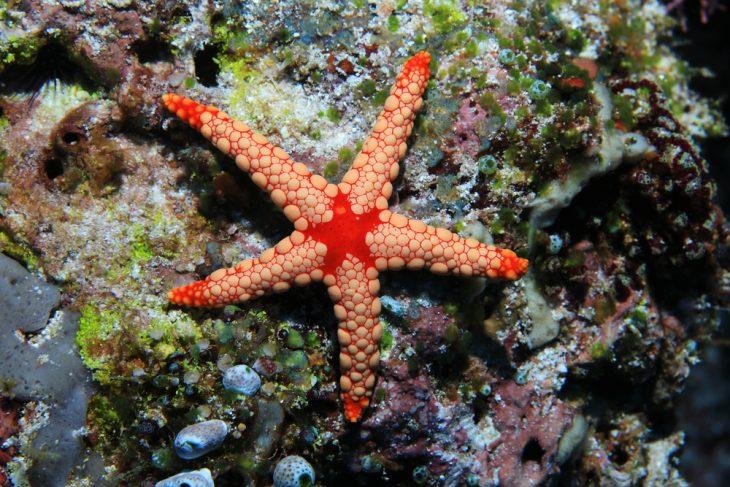 The Echinoblog: SEA STAR DEFENSE! How do starfish protect ...  |Microscopic Image Sea Star