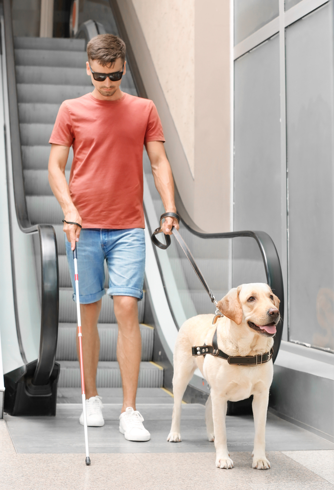 Blind man with guide labrador dog near escalator