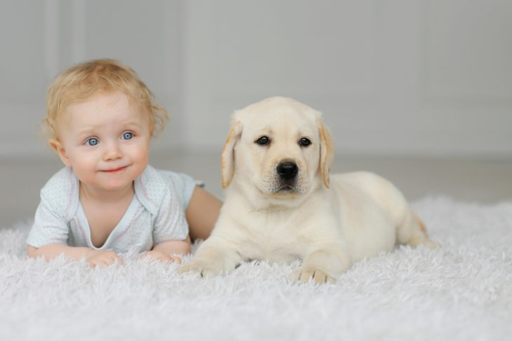 Little girl with the labrador pupy